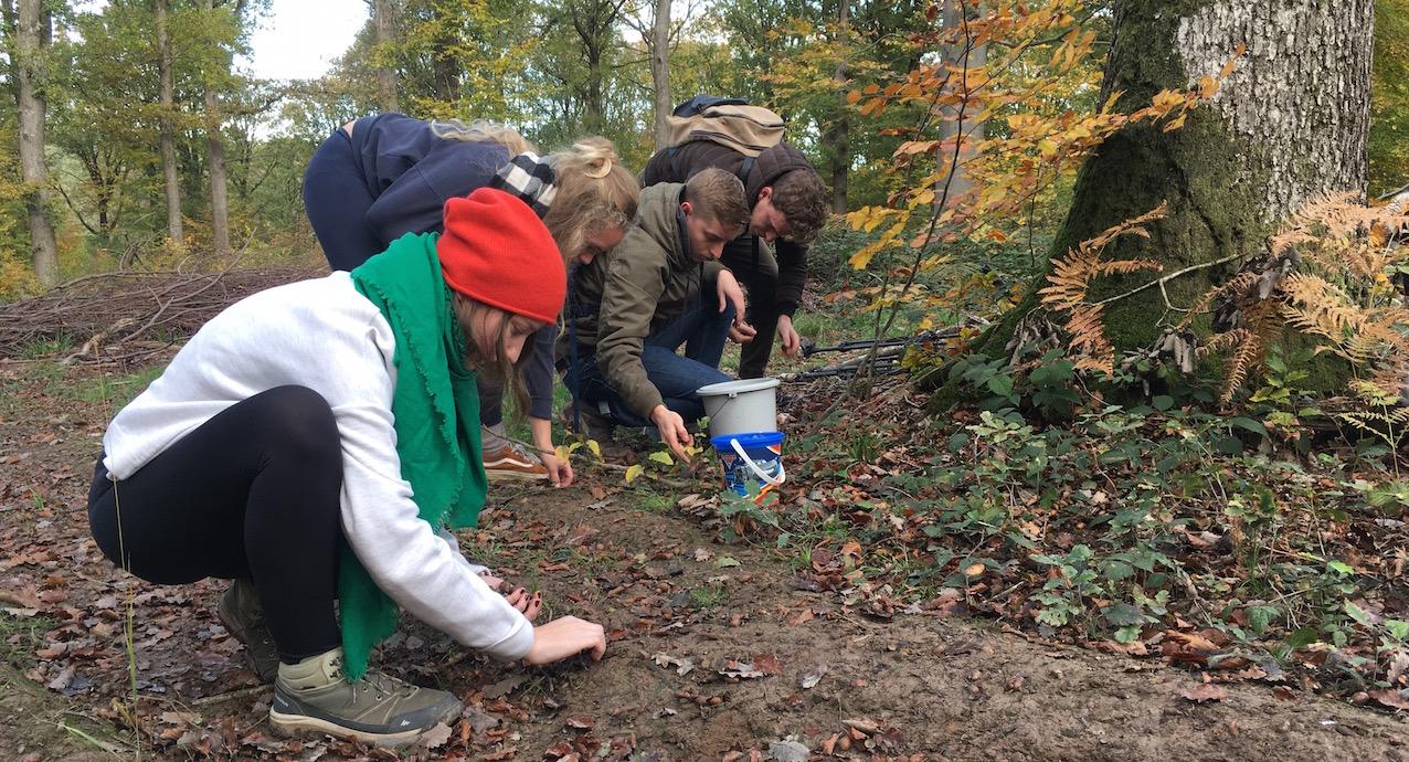 Ramassage de glands dans les bois du domaine d'Haugimont (UNamur).