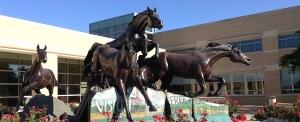 La médecine vétérinaire est un des domaines dans lesquels excelle l'université Texas A&M. Une opportunité pour les entreprises wallonnes, comme Revatis, à Aye, spécialisée en médecine régénérative pour les chevaux.