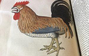 """Extrait de """"Historiae Animalium"""" de Conrad Gesner (XVI siècle)."""