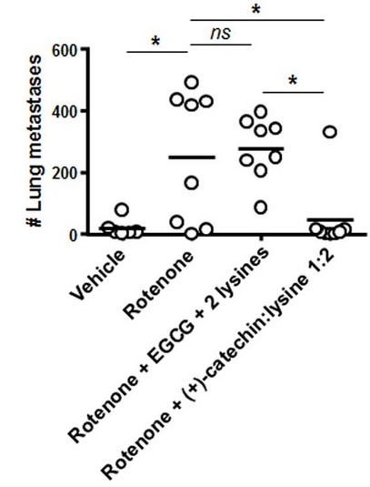 Nombres de métastases relevés dans les poumons des rongeurs cancéreux traités avec différents produits, dont la catechine:lysine 1:2 (à droite).
