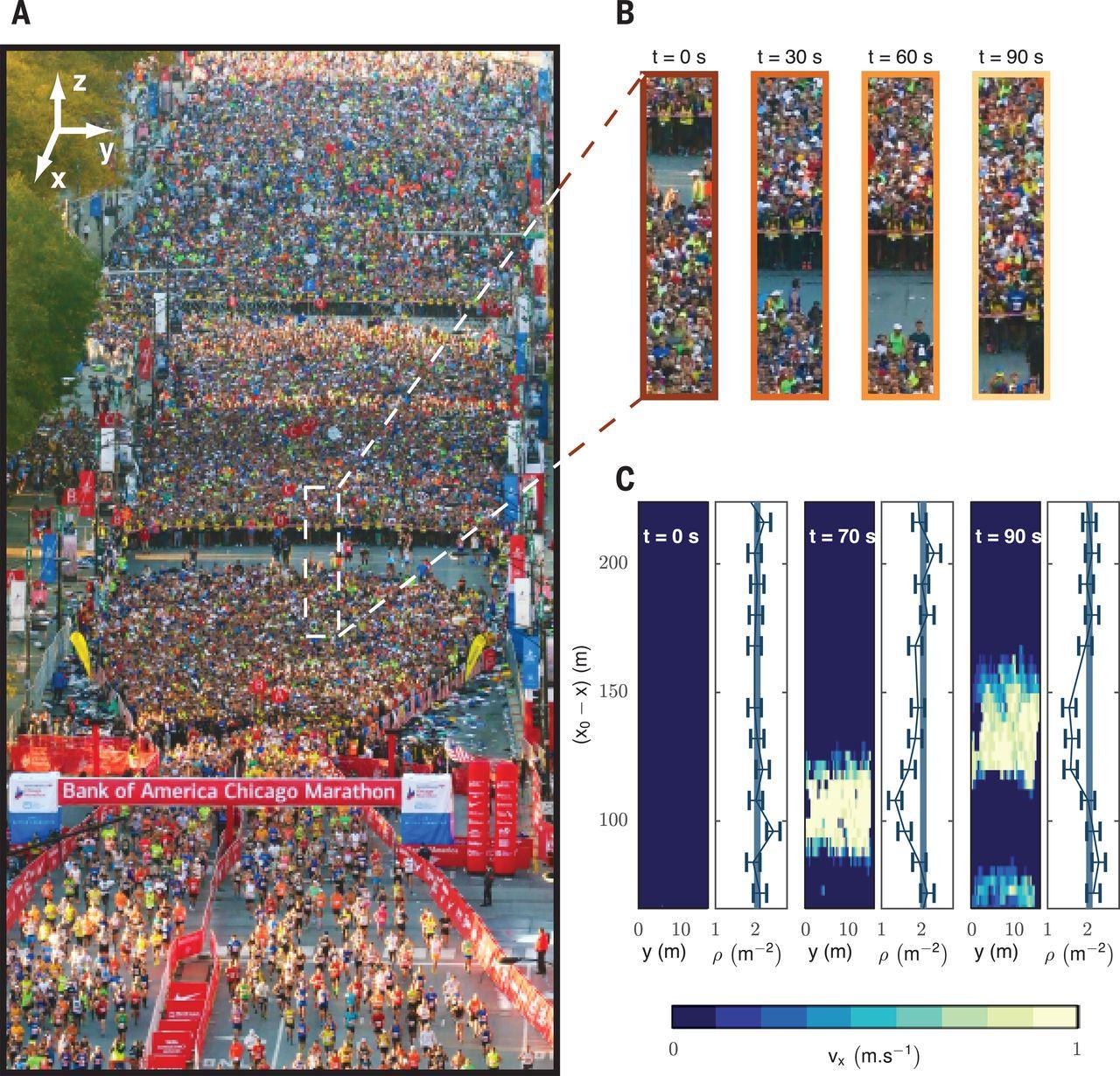 A : Image de la zone de départ de l'édition 2016 du Bank of America Marathon de la ville de Chicago. Image B : Zooms sur la zone encadrée dans A, montrant la séquence de déplacement des organisateurs de la course (chasubles jaunes) qui guident les coureurs vers la zone induisant des perturbations de vitesse et de densité dans la foule qui se propagent à vitesse constante. Image C : Ondes de vitesse et de densité qui se propagent dans le sens opposé de la marche dans la même foule. © Nicolas Bain/Science