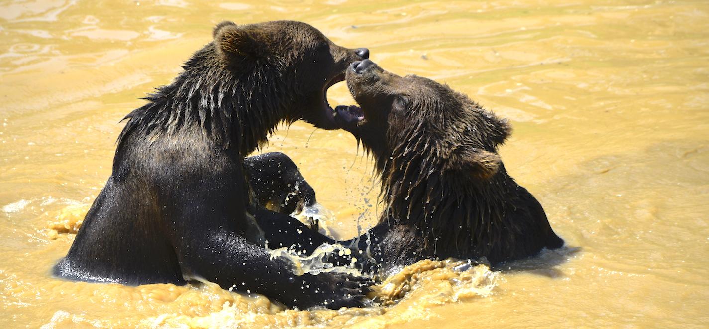 Colline aux ours, Han-sur-Lesse.