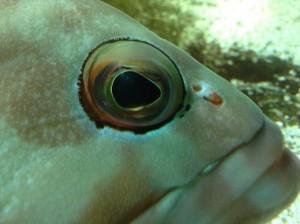Liege aquarium