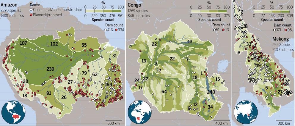 Ces trois cartes montrent la localisation des barrages actuels (points blancs) et en projet (points rouges), dans les bassins de l'Amazone, du Congo et du Mékong. Les cartes sont divisées en sous-régions écologiques. Les chiffres en noir précisent le nombre d'espèces de poissons qu'on ne retrouve que dans ces sous-régions. © Kirk Winemiller, Texas A&M University/Science (Cliquer pour agrandir)