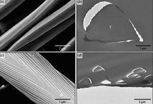 Vue microscopique des poils des fourmis d'argent. On observe à droite leur section triangulaire et l'orientation des poils dans le même sens. © PLoS/ULB (Cliquer pour agrandir)