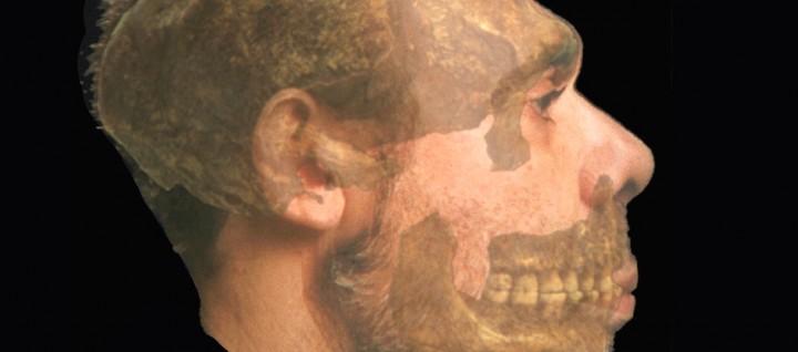 Reconstruction du profil de l'Homme de Spy. © IRSNB