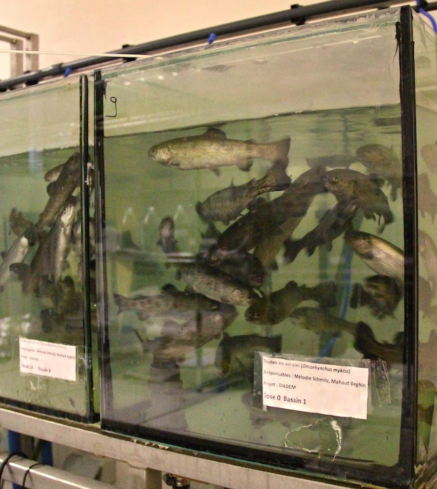 Aquarium, à l'UNamur, projet DIADeM. © C.S.
