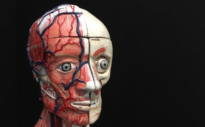 Une moulage papier mache du XX moulage anatomique
