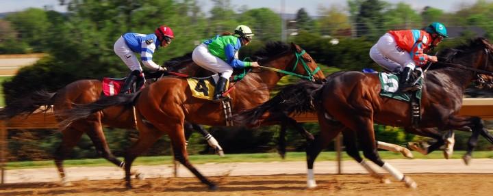 L'arthrose n'épargne  pas les animaux, y compris les chevaux de course.