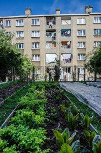 Potagers urbains, Anvers. © V.P.