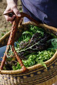 Récolte urbaine. © V.P.